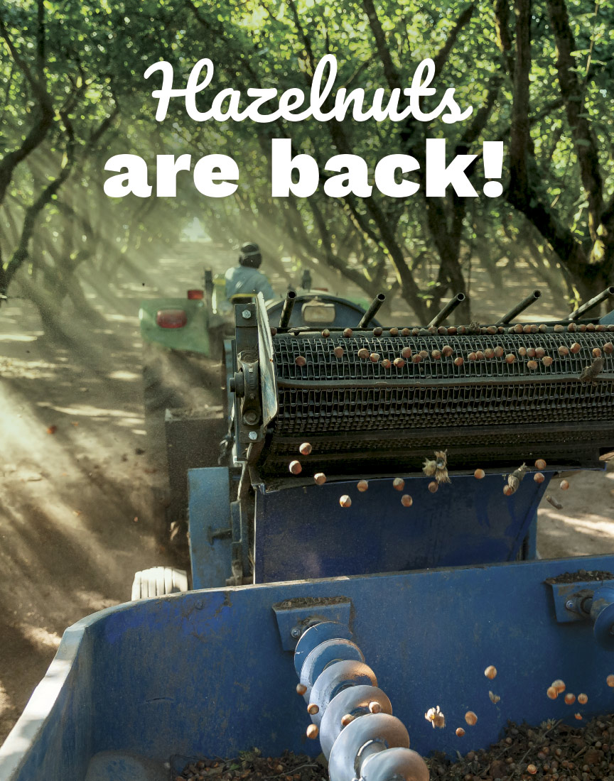 Hazelnuts are back
