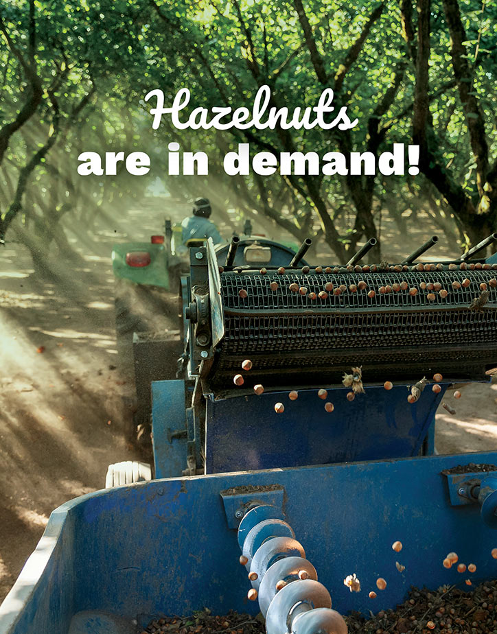 BC hazelnuts are in demand