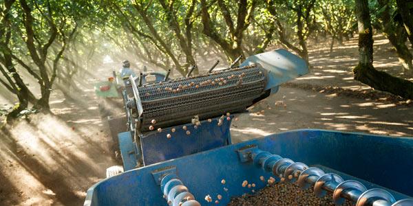 BCHGA collecting hazelnuts