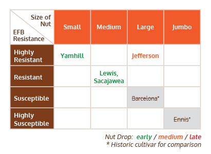 New Hazelnut Varieties Summary