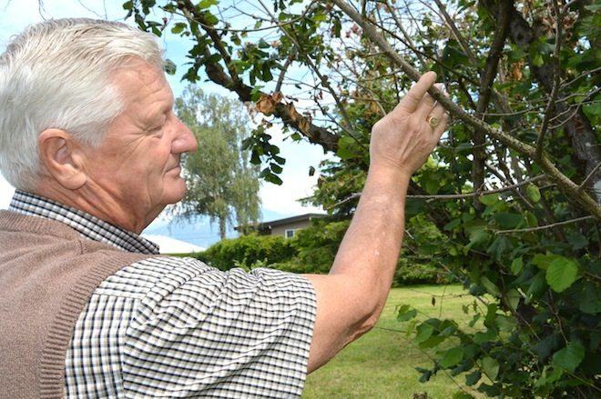 Walter Esau with EFB-resistant hazelnut tree